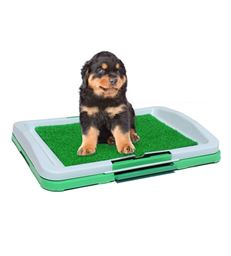 Insta-Potty Trainer By Animal Heaven For Dog Now Your Dog Wont Pee  At Home