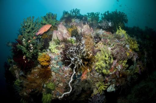 Colorful reef scene with red grouper, yellow crinoid, green coral and pink sponge, Komodo, Indonesia Poster Print WEXNEH65NHXK7QP1
