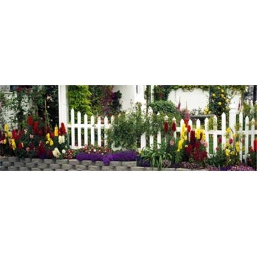 Flowers and picket fence in a garden La Jolla San Diego California USA Poster Print by - 36 x 12