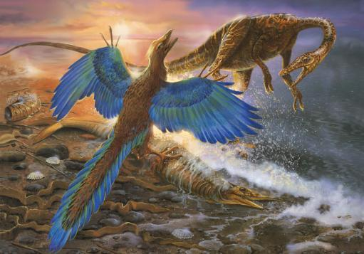Archaeopteryx defending its prey from an intruding Compsognathus Poster Print by Jan Sovak/Stocktrek Images