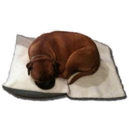 Enrych 1584 Separation Anxiety Relief Dog bed