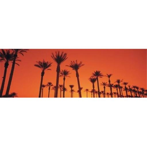 Panoramic Images PPI35114L Silhouette of date palm trees in a row Phoenix Arizona USA Poster Print by Panoramic Images - 36 x 12