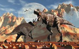 The eternal battle for survival, as a prehistoric Tyrannosaurus Rex poises to attack a smaller Triceratops in a battle of life and death Poster Print PSTMAS100388PLARGE