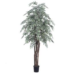Vickerman TEX1360-07 6 ft. Artificial Green & White Variegated Smilax Executive Tree in Black Pot