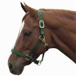 Intrepid International Nylon Halter, Green, Horse