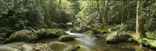 Roaring Fork River flowing through forest, Roaring Fork Motor Nature Trail, Great Smoky Mountains National Park, Tennessee, USA Poster Print