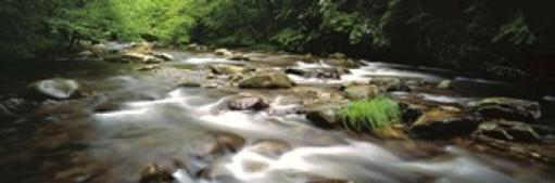 River flowing through a forest, Little Pigeon River, Great Smoky Mountains National Park, Tennessee, USA Poster Print