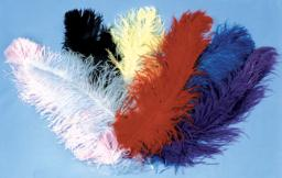 Ostrich Plumes Jumbo