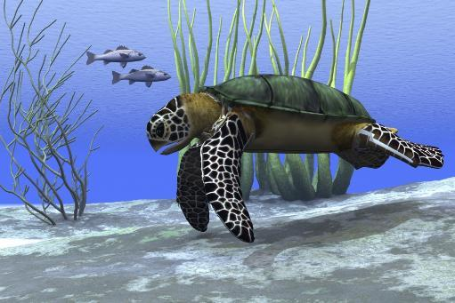 A sea turtle makes its way along the bottom of the sea looking for food Poster Print