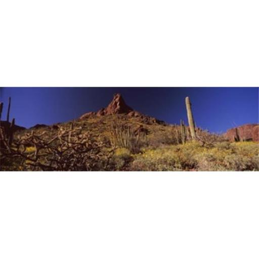 Panoramic Images PPI127405L Cacti on a landscape Organ Pipe Cactus National Monument Arizona USA Poster Print by Panoramic Images - 36 x 12