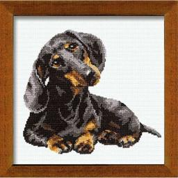 Riolis 16 Count Dachshund Counted Cross Stitch Kit, 9.75 by 9.75-Inch