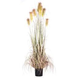 Vickerman T15008 6 ft. x 18 in. Artificial Brown Reed Grass in Black Plastic Pot
