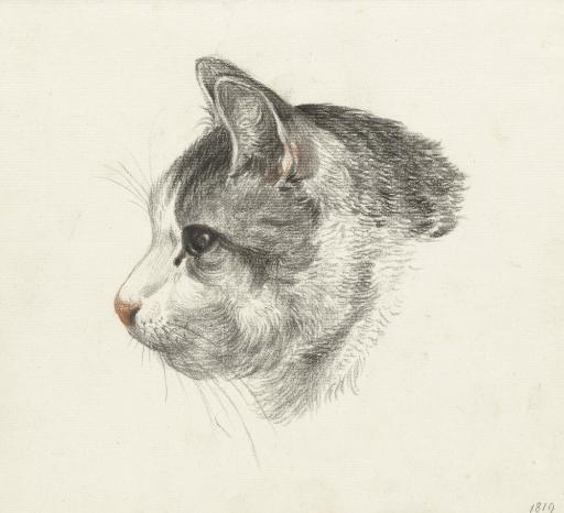 Head Of A Cat, Facing Left, By Jean Bernard, 1819, Dutch Chalk Drawing. Poster Print