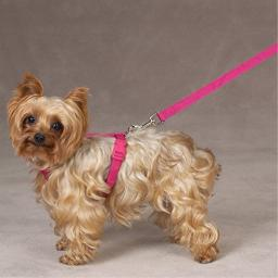 """Zack & Zoey 1"""" Nylon Dog Harness with Nickel-Plated D-ring and Plastic Buckles, Raspberry Sorbet"""