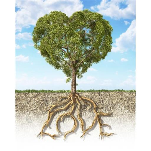 Cross Section of Soil Showing A Heart-Shaped Tree with Its Roots As Text Love. Grass On The Surface & Fluffy Clouds Sky in The Background Poster Print