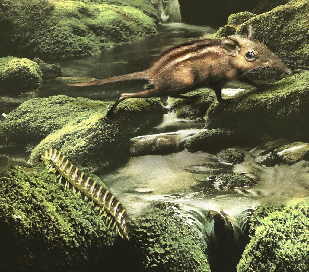 A primitive Zalambdalestes has his eyes on a millipede for an afternoon snack Poster Print