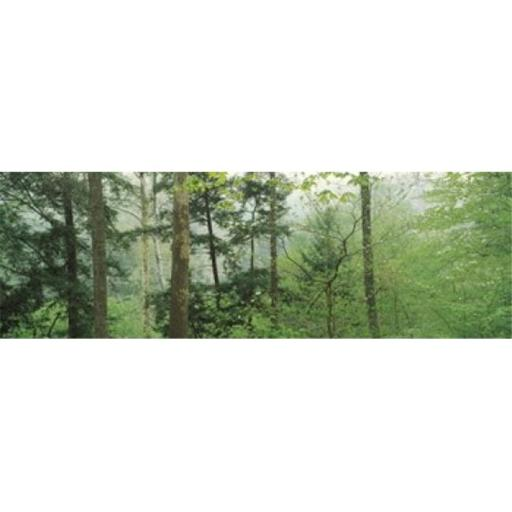 Panoramic Images PPI124549L Trees in spring forest Turkey Run State Park Parke County Indiana USA Poster Print by Panoramic Images - 36 x 12