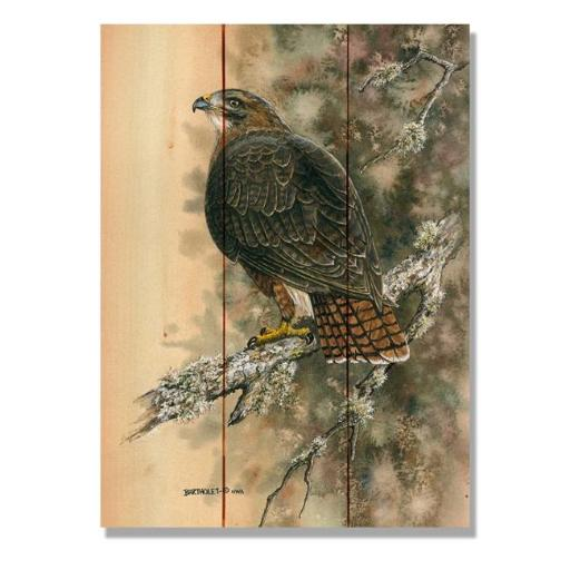 Day Dream DBRTH1115 11 x 15 in. Bartholets Red Tailed Hawk Wall Art