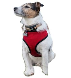 2 Layer Adjustable Padded Dog Friendly Vest Harness By Animal Heaven-Color Red- Size Large