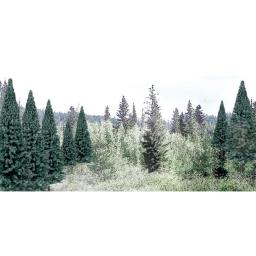 Woodland Scenics WOO1587 2 -4 in. Blue Spruce - Pack of 18