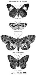 """Stampers Anonymous 486967 Tim Holtz Mounted Red Rubber Stamp 2.5""""X5"""", Butterflies & Moths 1"""