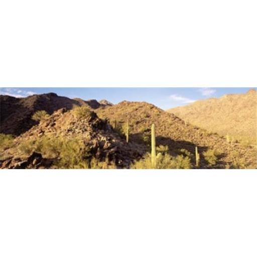 Panoramic Images PPI44342L Cactus plants on a landscape Sierra Estrella Wilderness Phoenix Arizona USA Poster Print by Panoramic Images - 36 x 12