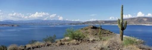 Cactus at the lakeside with a mountain range in the background, Lake Pleasant, Arizona, USA Poster Print