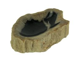 Natural Petrified Wood Centerpiece Bowl