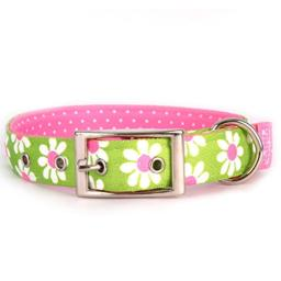 "Yellow Dog Design Green Daisy Uptown Dog Collar Fits Neck 24 to 27"", X-Large/1"" Wide"