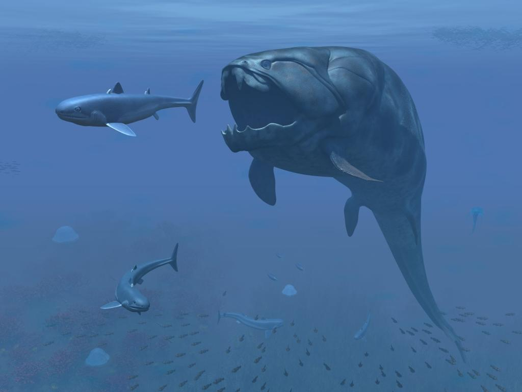 A prehistoric Dunkleosteus fish prepares to eat a primitive shark Poster Print