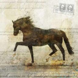 Horse Dance 2 Poster Print by Ken Roko PDX476ROK1034LARGE