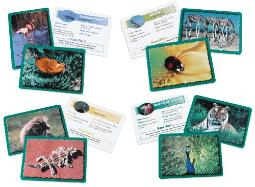 Learning Resources Classifying Cards Bundle