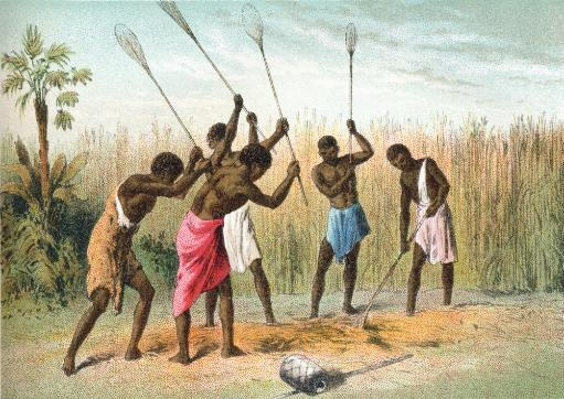 Native Africans Beating Sorghum, Or Sorgo, Which Is Grown For Fodder, Silage Or Syrup, In Africa In The 19Th Century. From The Life And.