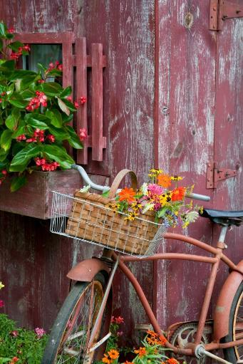 Old bicycle with flower basket next to old outhouse garden shed, Marion County, Illinois, USA Poster Print