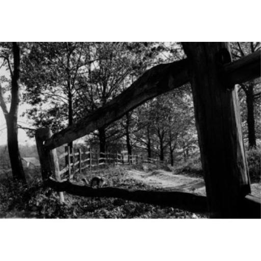 Posterazzi SAL255424745 Squirrel on Rail Fence in Autumn Setting Poster Print - 18 x 24 in.