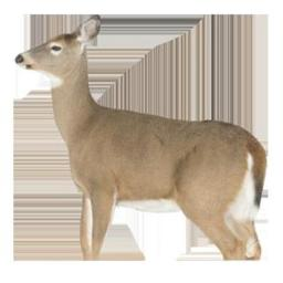 Montana Decoy 7745 Whitetail Dreamy Doe Decoy