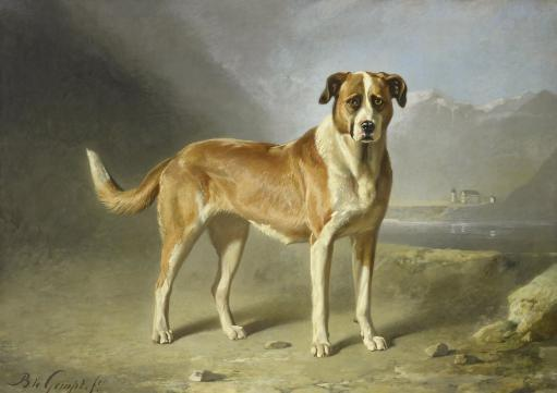 A Saint Bernard Dog, By Bernard Te Gempt, C. 1860-79, Dutch Painting, Oil On Canvas Poster Print