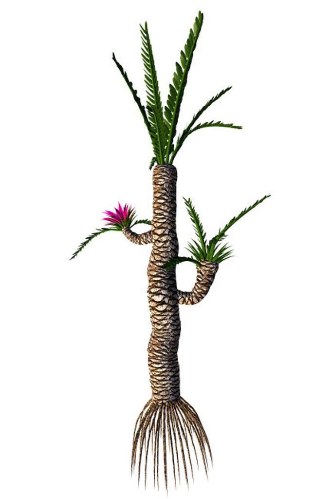 A prehistoric Williamsonia plant from the Mesozoic Era Poster Print by Corey Ford/Stocktrek Images