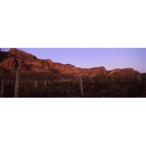 Panoramic Images PPI127416L Cacti on a landscape Organ Pipe Cactus National Monument Arizona USA Poster Print by Panoramic Images - 36 x 12