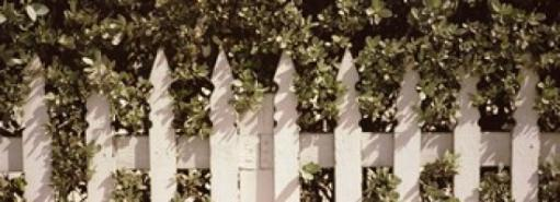 White picket fence surrounded by bushes along Truman Avenue, Key West, Monroe County, Florida, USA Poster Print