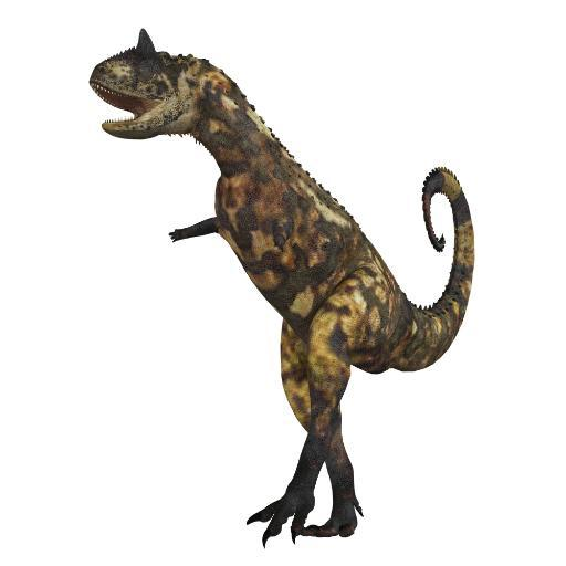 The Carnotaurus dinosaur was a large carnivore in the Cretaceous Period of Earths history. Its fossils have been found in South America. Its name.