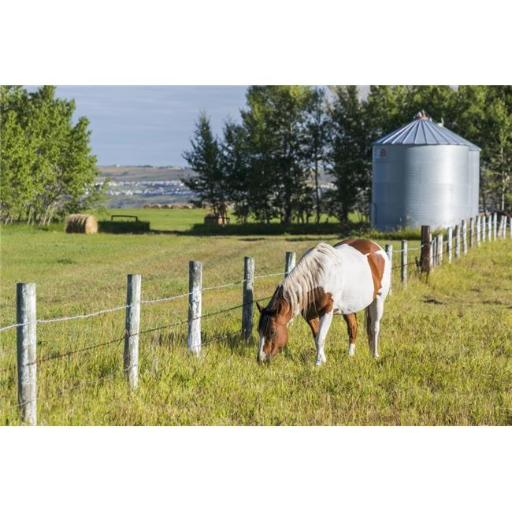 Posterazzi DPI12257438 White & Brown Horse Grazing in Barbed Wire Fenced Field with Grain Bins Poster Print - 19 x 12 in.
