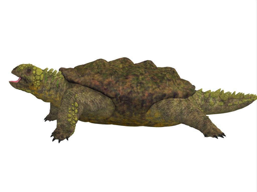 A prehistoric Proganochelys turtle species from the Triassic Period. Proganochelys is the second oldest turtle species discovered and lived in Germany and Thailand in the Triassic Period Poster Print