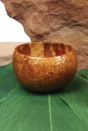Coconut Cup FF860020