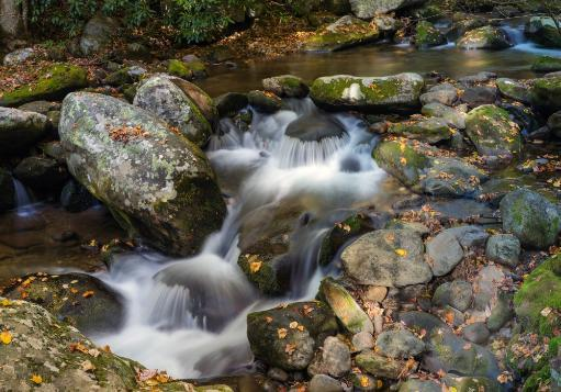 Stream flowing through rocks in a forest, Roaring Fork Motor Nature Trail, Great Smoky Mountains National Park, Tennessee, USA Poster Print