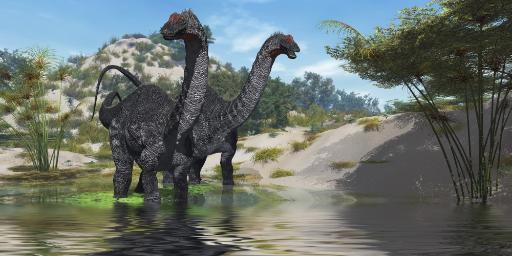 Two Apatosaurus dinosaur wade through a lush pond looking for plants to eat Poster Print