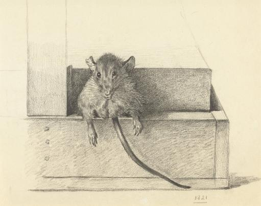 Mouse Caught In A Trap, By Jean Bernard, 1825, Dutch Pencil Drawing. Poster Print