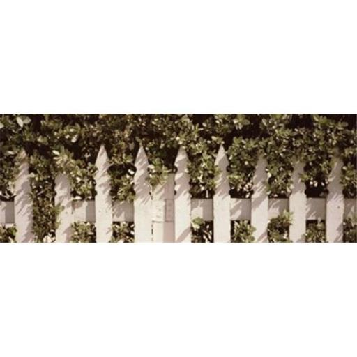 Panoramic Images PPI133613L White picket fence surrounded by bushes along Truman Avenue Key West Monroe County Florida USA Poster Print by Panoram