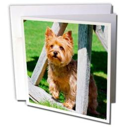 """3dRose Yorkshire Terrier Standing in A Wagon Wheel - Greeting Cards, 6 x 6"""", Set of 6 (gc_207149_1)"""