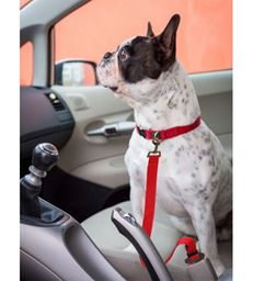 Premium New  Automobile Travel Seat Belt For Dogs